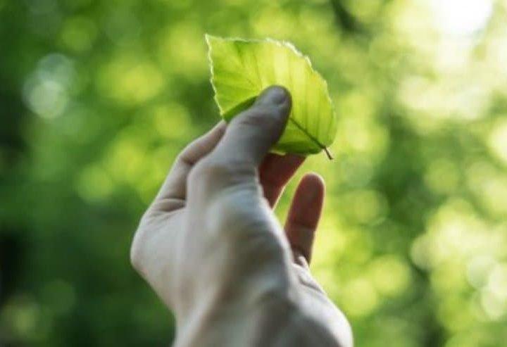 Σχέδιο δράσης της HELLAGRO Α.Ε. για την προστασία του περιβάλλοντος